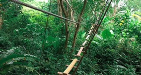 zipline_4_resize-to-280x150-copy-2