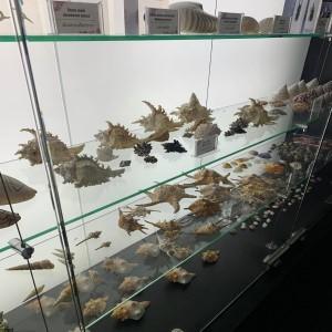 resize-aquarium
