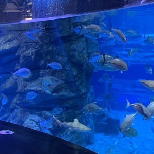 resize-aquarium2