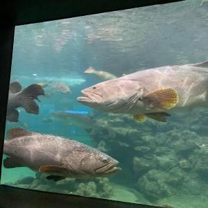 resize-aquarium3